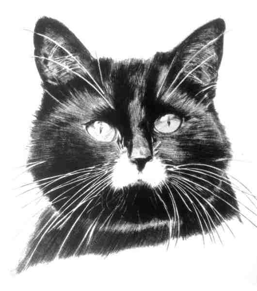 Black Cat 1981