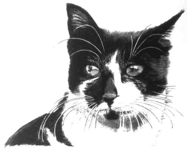 Black & White Cat 1981