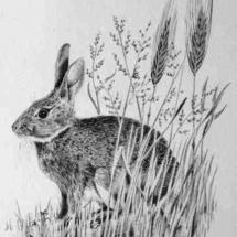Hare 1982