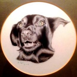 Lulu, dog portrait 1982