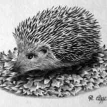 Small Hedgehog 1982