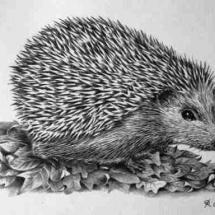Large Hedgehog 1982