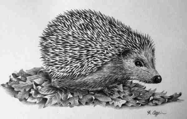 Large Hedgehog 1982