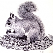 Squirrel 1982