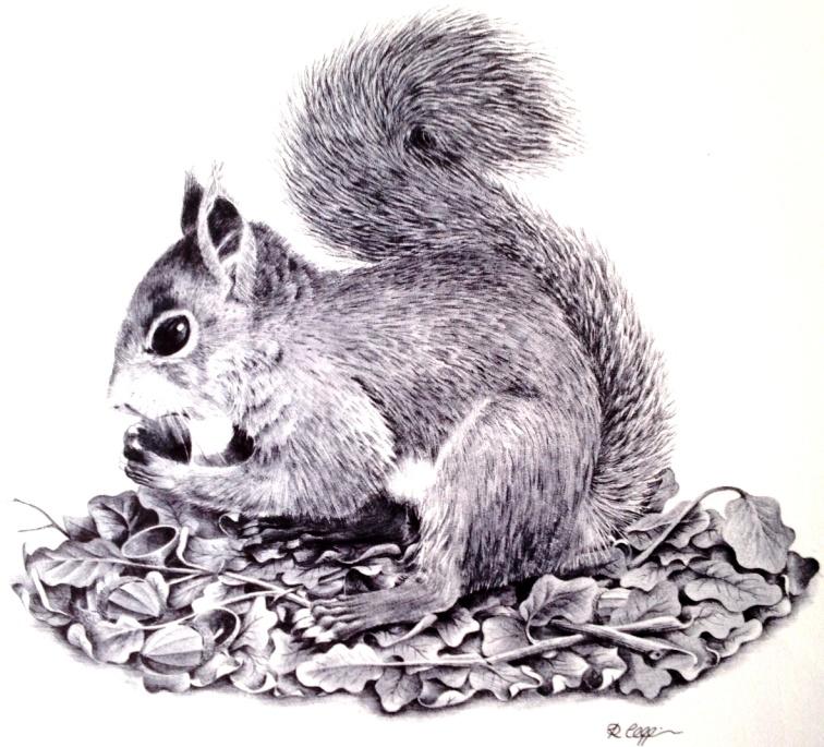 Squirrel 1982