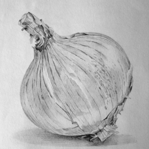 Study of an onion with HB pencil 1996