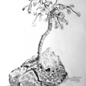 Study of ornament HB pencil 1996